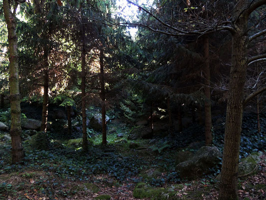 La Foresta dei Vosgi