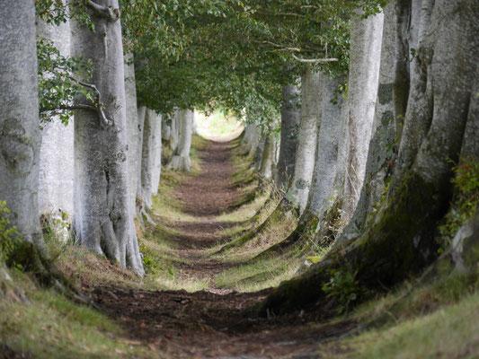 Constanze Stiebert (12 Jahre) - Waldweg