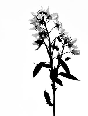 Alina Escher - Blütenzauber