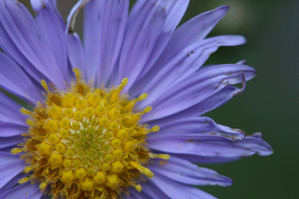 Leoni Kipka (15 Jahre) - Blume
