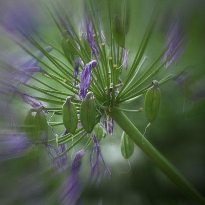 Linus Klauke - Welkende Blume