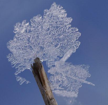 Hannah Lehmann (16 Jahre) - Schneekristall