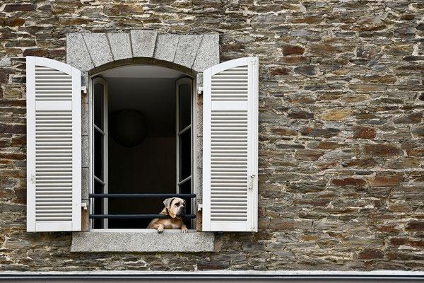 Alina Escher (17 Jahre) - Hundefenster