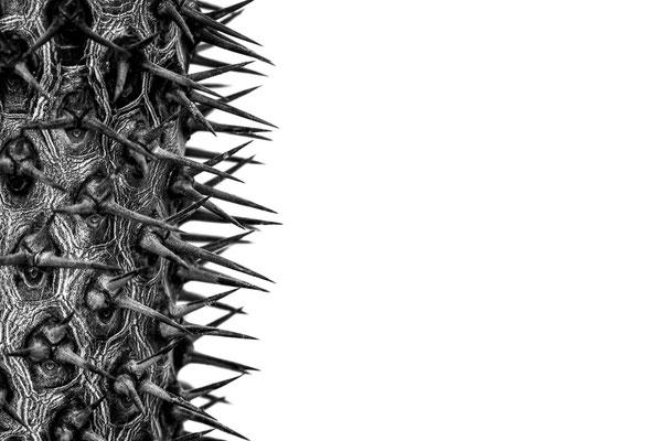 Alina Escher (17 Jahre) - Achtung piksig (Thema Natur - Platz 2)