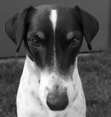 Fabian Berger - Hundeporträt