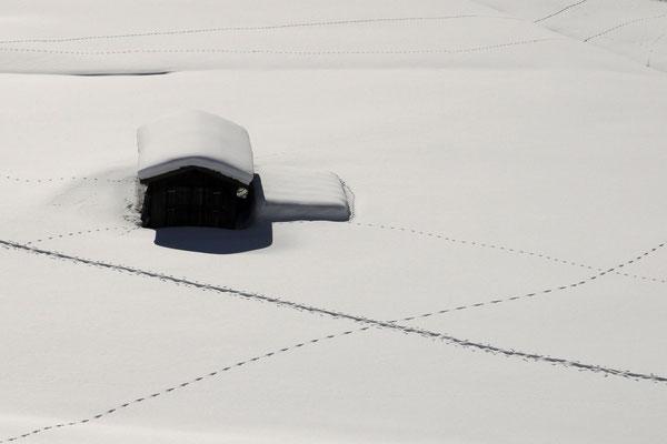 Lisa Scholz - Spuren im Schnee (Sparte SW)