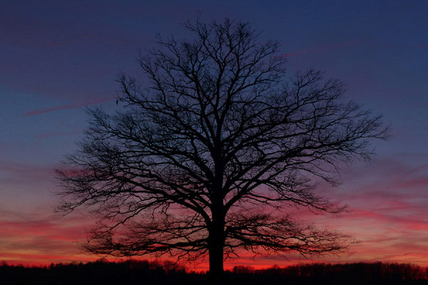 Linus Klauke - Einsamer Baum