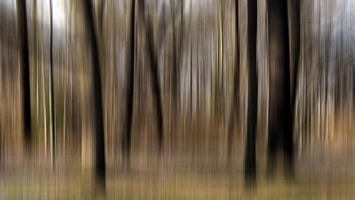 Charlotte Treppe - Wald
