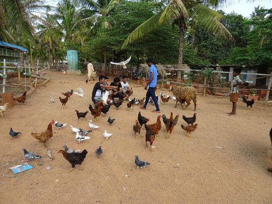 Hühner und Enten