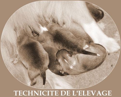 notre expertise en élevage