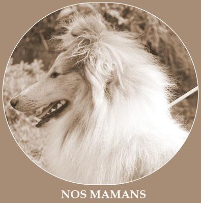 Nos mamans shetland