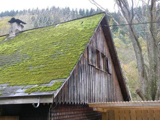 Dach mit Moos belegt