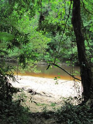 Blick vom Dschungelweg auf den Fluss.