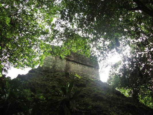Templo VI (Templo de las Inscripciones) liegt fernab der Haupttempel und wird sehr selten besucht. Tikal hat, im Vergleich zu Copan beispielsweise, sehr wenigeTempel mit Inschriften. Templo VI ist die Ausnahme.