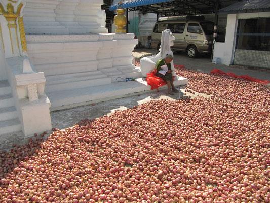 Zwiebelverkauf vor einer Paya (Tempel, Pagode).