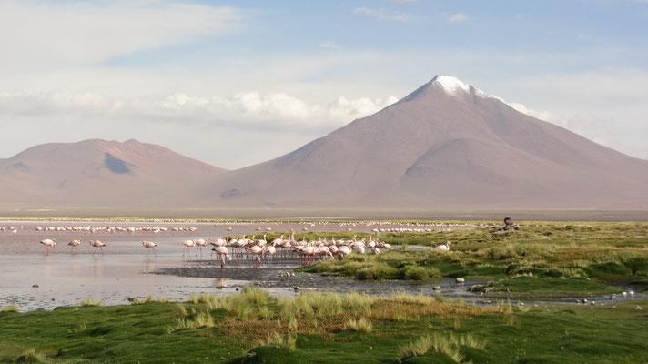 Die Laguna Colorada liegt  auf einer Höhe von 4278 m über dem Meer.
