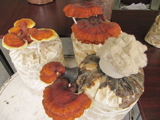 Im Fungus-Restaurant. Selbstredend weisen alle Gerichte auf der Karte Pilzspuren oder mehr auf. Die Pilze werden meist sogar selbst angebaut.