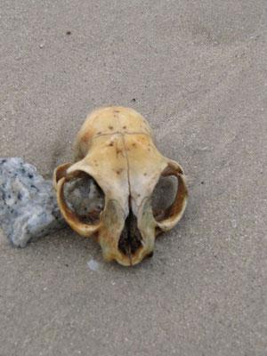 Ein Strandschädel.