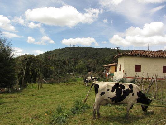 Unsere Nachbarschaft in Santa Elena auf 2500m über dem Meeresspiegel.