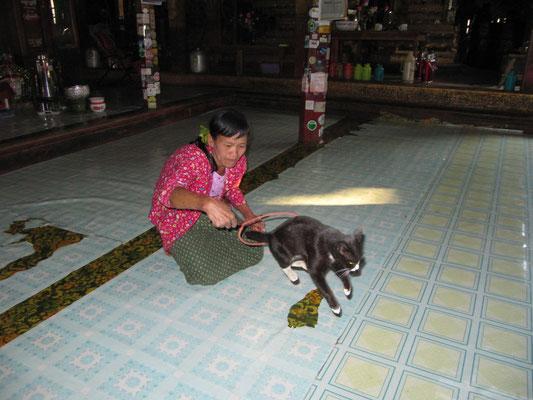"""Das """"Springende-Katze-Kloster"""" (Nga Hpe Chaung) macht seinem Namen alle Ehre. Leider ist diese Ehre eher peinlicher Natur. Touristen warten bis dickgefütterte Katzen alle paar Minuten mehr durch Reifen geschoben werden."""