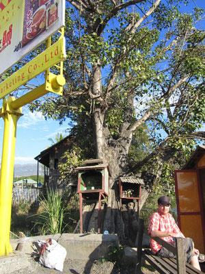 Dieses Foto zeigt mehr als man zunächst denkt. Hypermoderne Werbung, am Baum montierte Buddhaschreine und natürlich Sebastian.