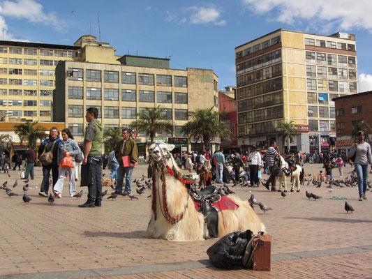 Ein Lama auf einem Plaza.