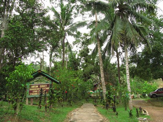 Eingang zu unserer Unterkunft. Man beachte die wunderbare Lage inmitten des Jungles.