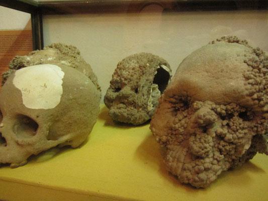 Fossile Schädel. (Na Bolom)