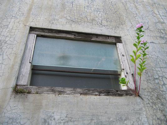 Fensterbeplanzung.