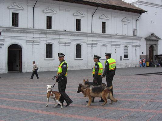 3 Bullen & 3 Hunde.