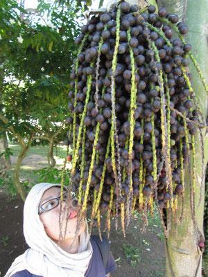 Verbotene Früchte. (Casco Antiguo)