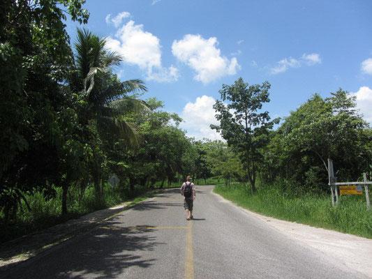 Eine Straße im Dschungel.