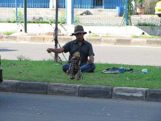 Dressierte Affen bringen Straßenkünstlern die Extrarupie.