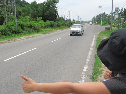 Chihi beim fast täglichen per Anhalter fahren.