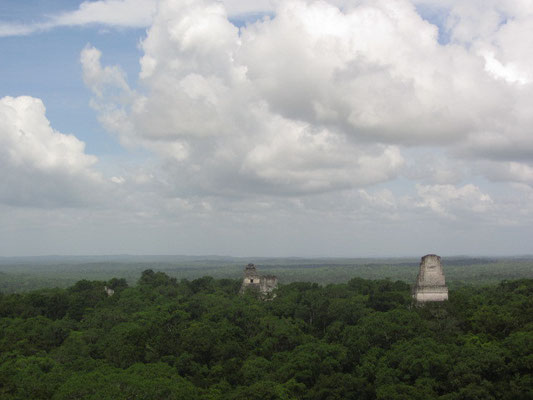 Blick von Templo IV. Mit 64 m ist dieser Tempel der höchste in Tikal und bietet bei Weitem den besten Ausblick.