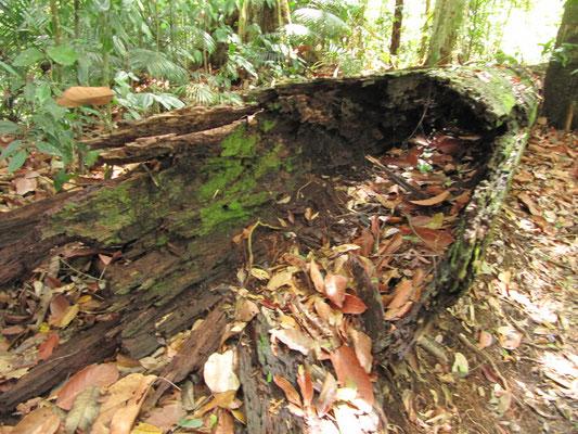 Das Resultat eines Termitenbefalls.