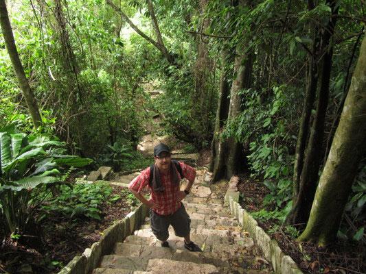 Ab durch den Dschungel.
