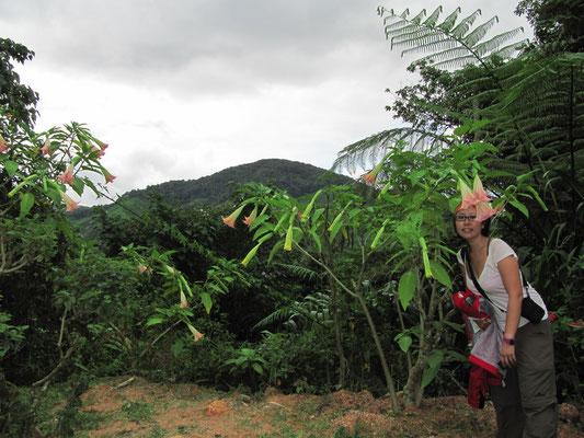 Auf dem Weg zu den Boh-Teeplantagen.