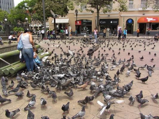 Auf dem Plaza de la Cultura.