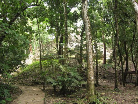 Viele Ruinen sind noch nicht vom Dschungel befreit.