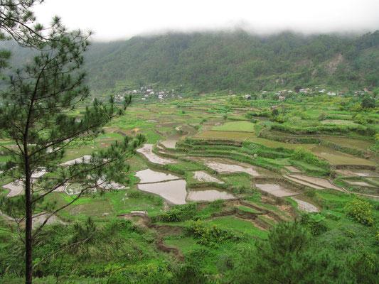 Die Kapay-aw-Reisterrassen.