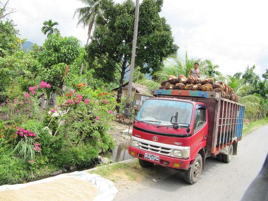 Vorbeifahrender Früchtetransporter.