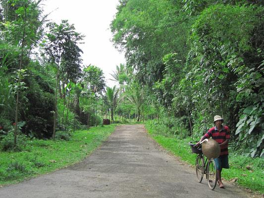 Die gesamte Natur um Malang herum erinnert an einen geplegten Urwald.