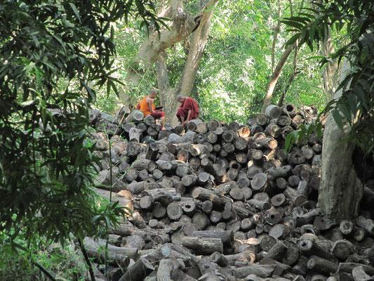 Mönchsnovizen auf einem Holzhaufen im Mahagandayon-Kloster. (Amarapura)