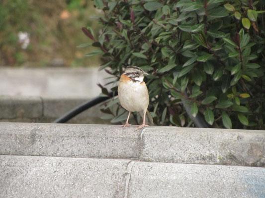 Vögelchen im Parque San Sebastian.
