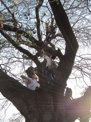 Kinder und ein Baum.