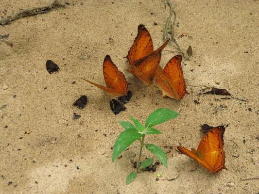 Schmetterlinge?