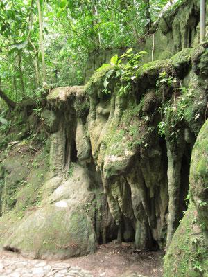 Natur. Soetwas gibt's normalerweise nur in Höhlen, ber bei der Dschungelfeuchtigkeit überrascht nichts mehr.