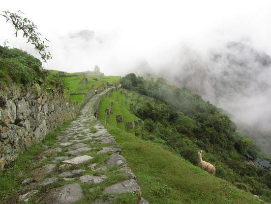 Wer M.P. zu Fuß über den Inka-Pfad erreicht läuft über diesen Steinweg.