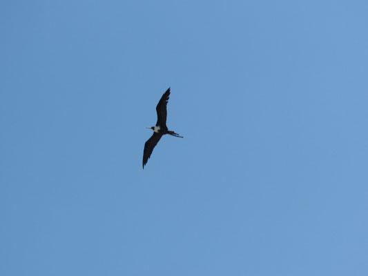Flugtiergruppe 5 ähnelt sehr einer Riesenschwalbe.